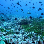 The Asia Pacific region is characterised by high marine biodiversity. Credit: Andrew Heyward/AIMS